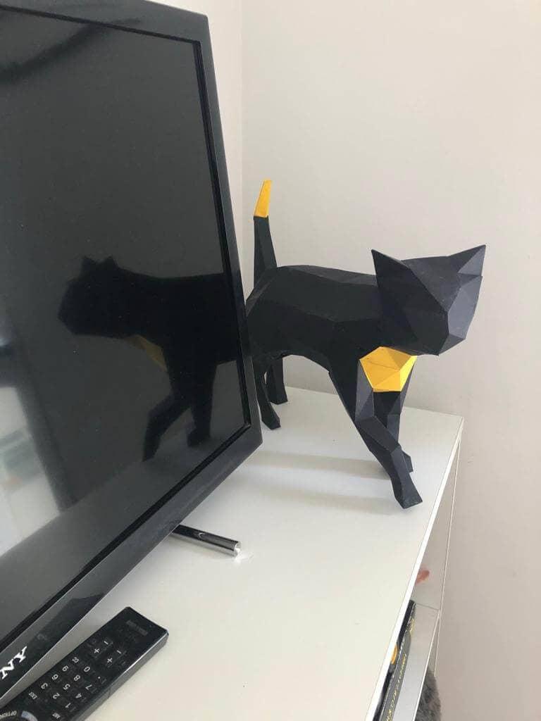Gato preto e amarelo em cima de uma mesa em outro angulo